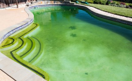 Swimming pool water green