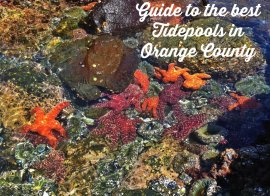 guide to your most useful tidepools in orange county.jpg