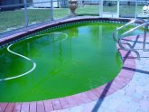 How to treat green pool water?