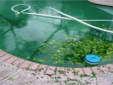Removing leaves from Pool