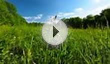 clip 50348199: green meadow and cloudy sky