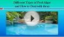 Different Types of Pool Algae and How to Deal with them