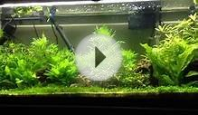 Planted tank pool filter sand