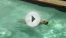 Pool Safety for Your Dog